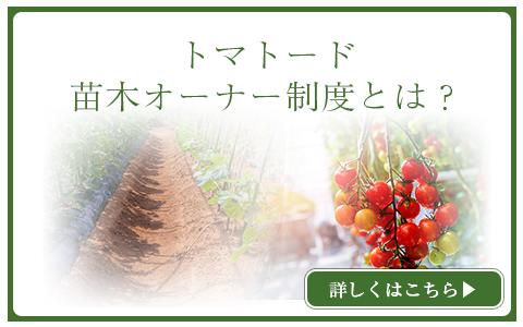 トマト―ド苗木オーナー制度とは